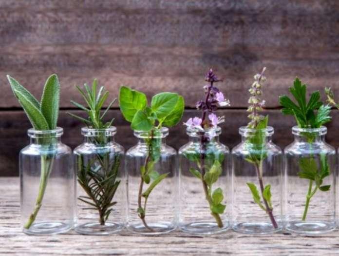 φυτά που διώχνουν τα κουνούπια