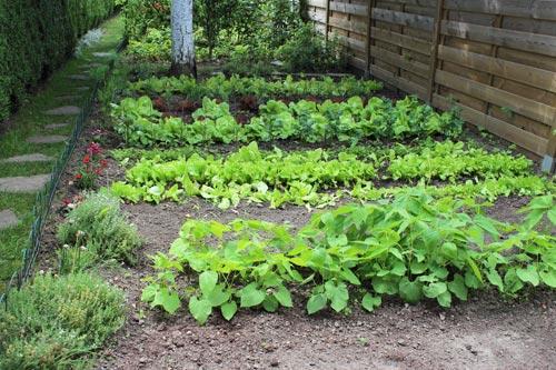 Κοινόχρηστη κηπουρική