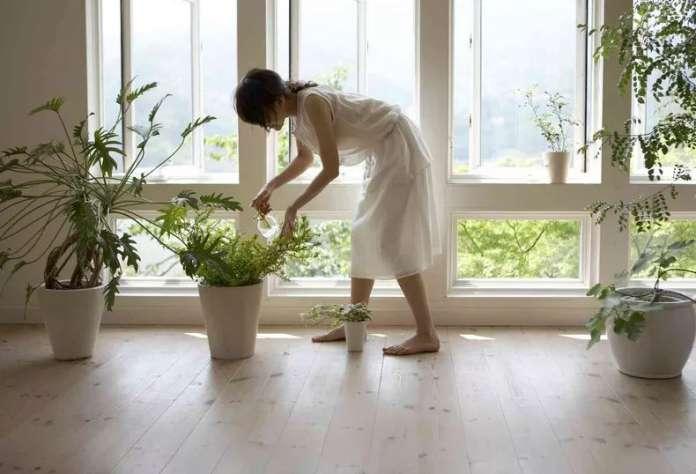 φυτά feng shui