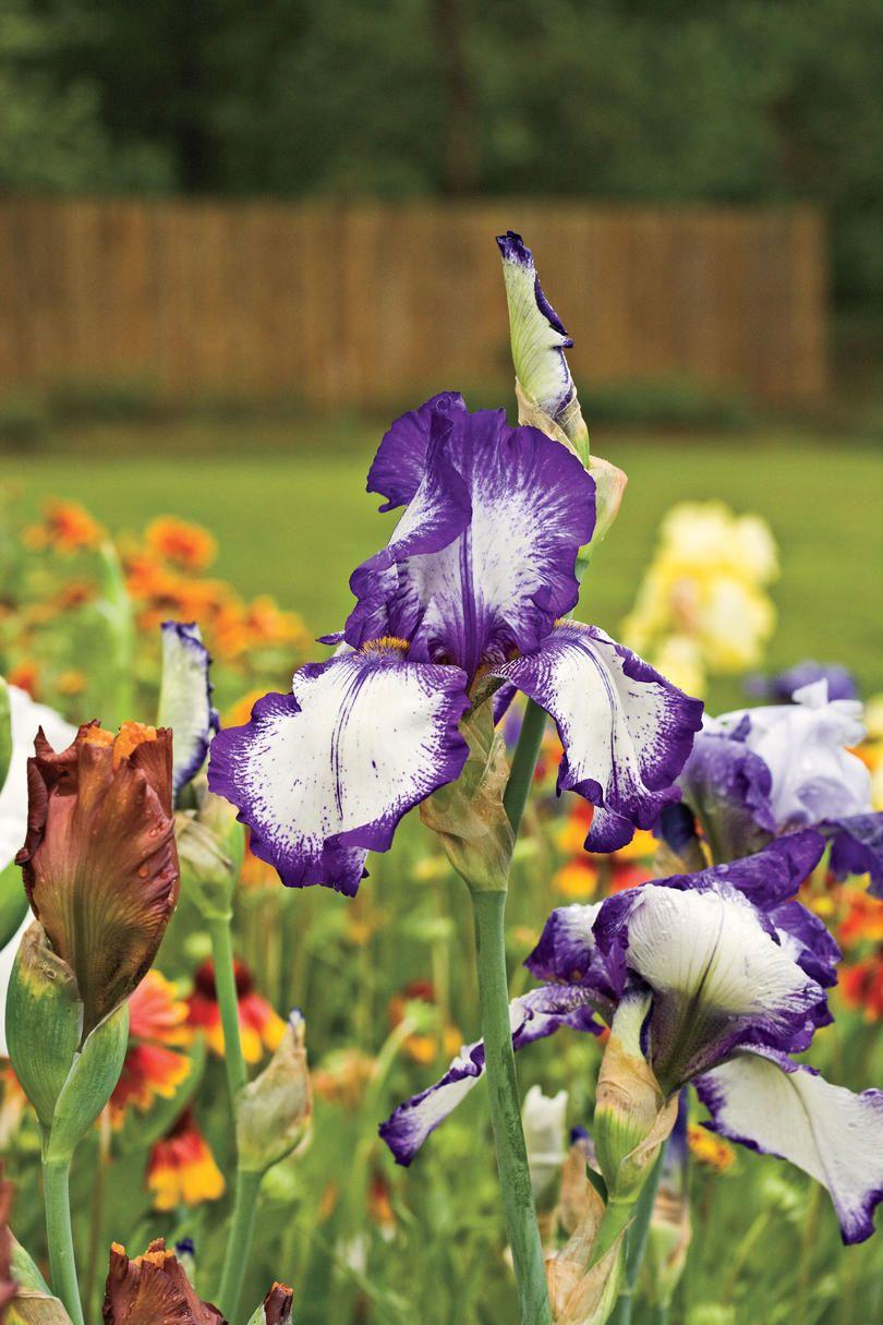 χρωματιστά λουλούδια για τον κήπο