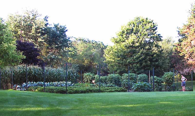 κεφαλάγκαθο κήπου