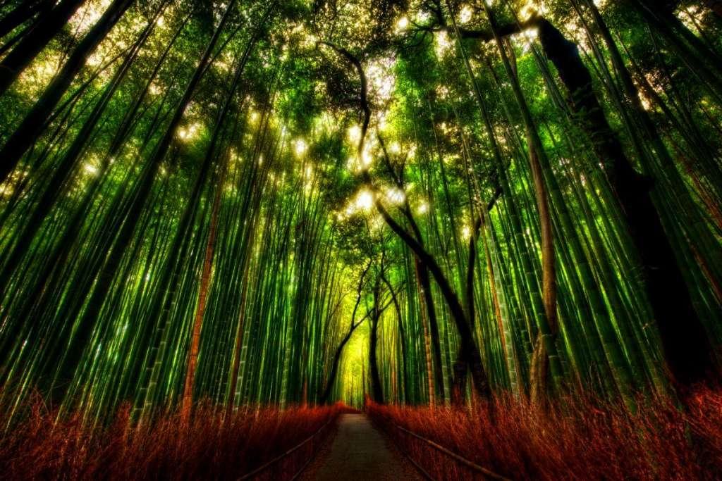 ιαπωνια δάσος bamboo