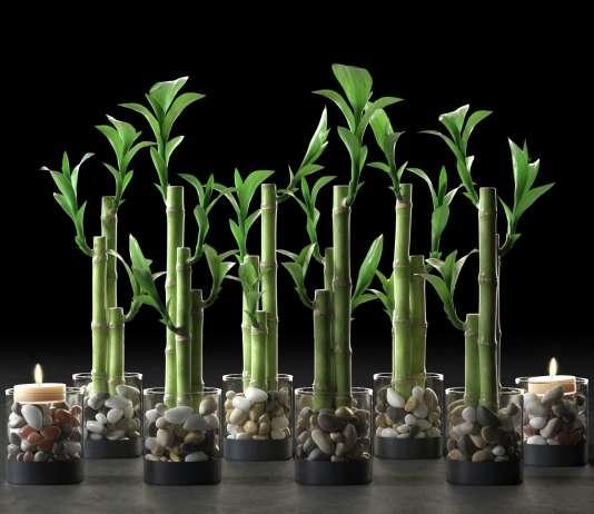 φυτά για καλοτυχία