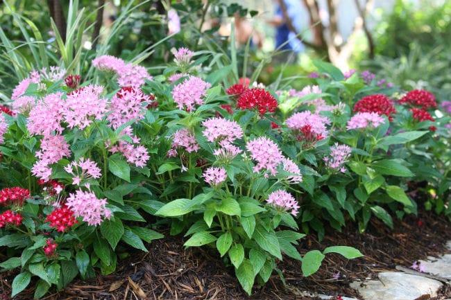 φυτά εξωτερικού χώρου πέντας