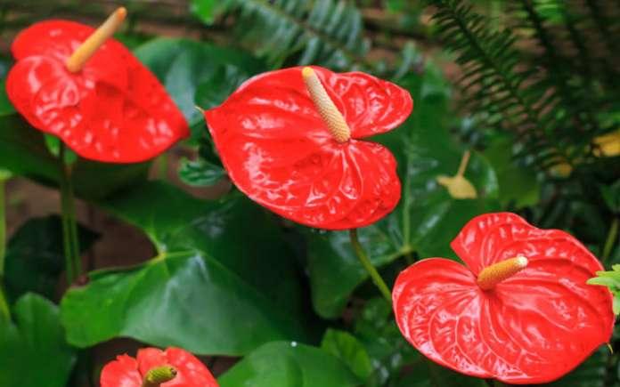 φυτά εξωτερικού χώρου