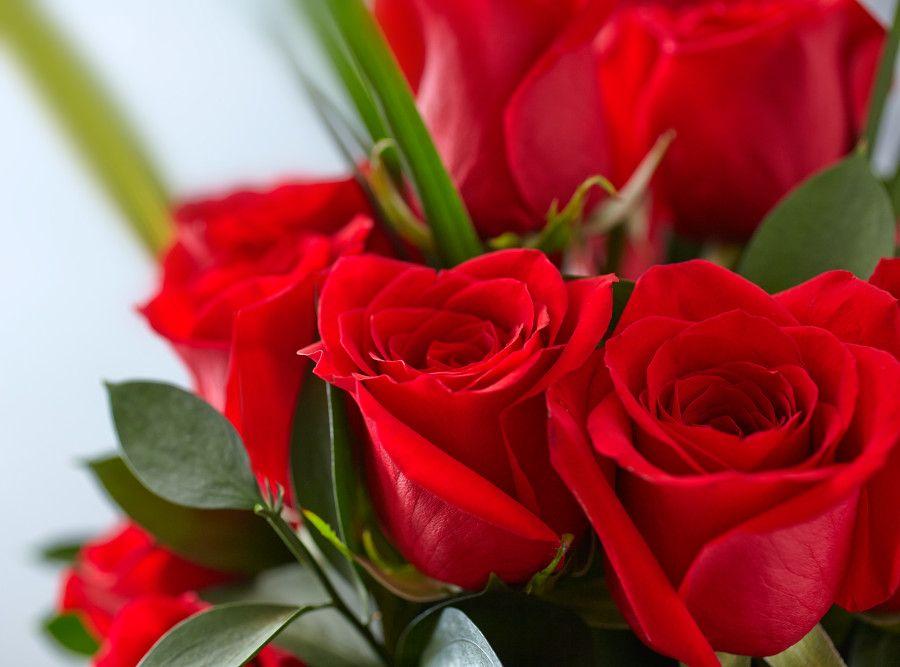 λουλούδια που απολαμβάνουν οι αλλεργικοί